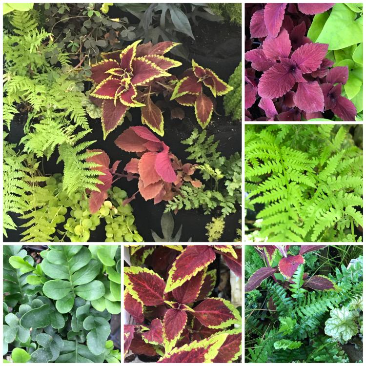 Tropical Living Wall plants