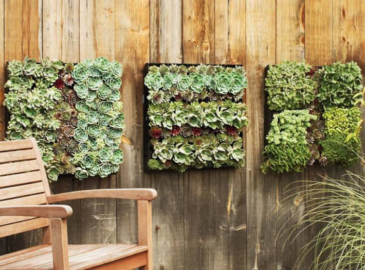 outdoor living wall wall plants outdoor architectural